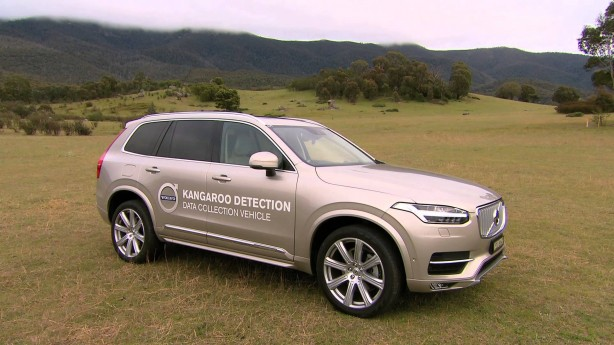 Volvo working on world-first kangaroo detection system <div class=