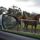 Kia Sportage Review - 2012 SLi Diesel Automatic, Side Mirror 2
